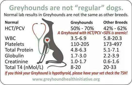 greyhoundblood