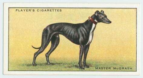 Master McGrath on a Cigarette Card, Ireland